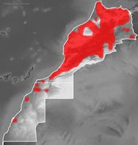 Mapa de distribución de Agama impalearis