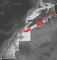 Mapa de distribución de Chalcides boulengeri