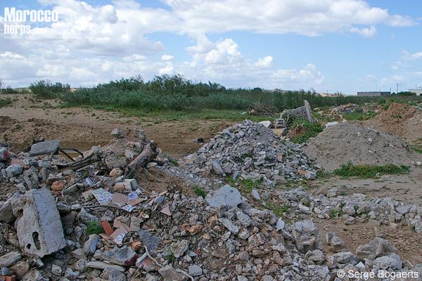 Habitat of Chalcides mauritanicus