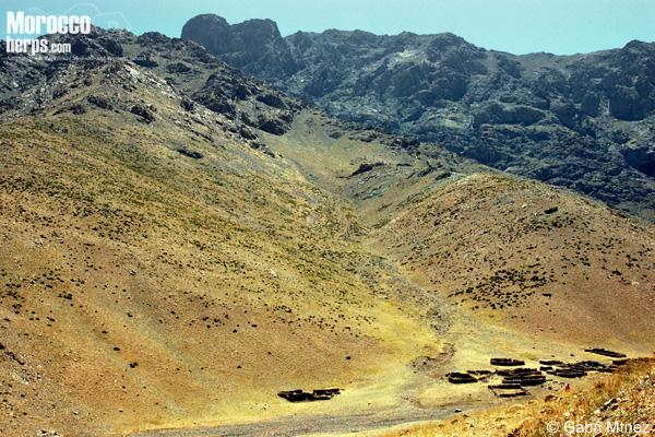 Hábitat de Chalcides montanus