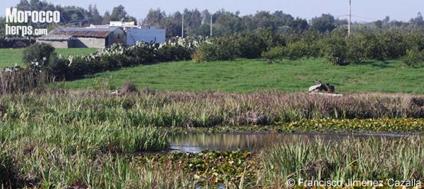Hábitat de Emys orbicularis en Marruecos