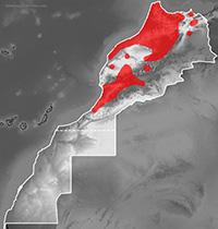Mapa de distribución de Hyla meridionalis