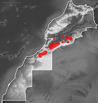 Mapa de distribución de Tarentola boehmei