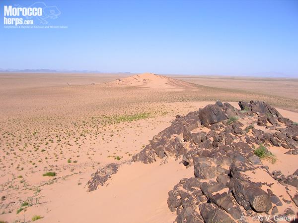 Hábitat de Tarentola deserti