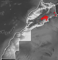 Mapa de distribución de Tarentola deserti