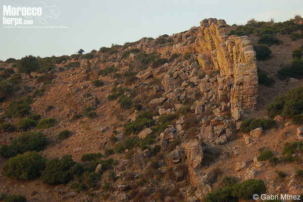 Hábitat de Tarentola mauritanica