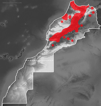 Mapa de distribución de Timon tangitanus