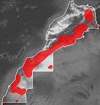 Mapa de distribución de Trapelus boehmei