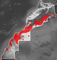 Mapa de distribución de Tropiocolotes algericus