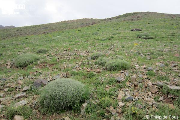 Hábitat de Vipera monticola