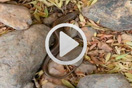 Chalcides polylepis por Victor Gabari