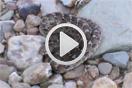 Echis leucogaster por Gabri Mtnez