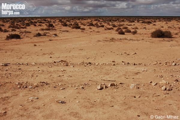Tantan Playa