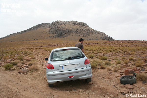 Jebel Sirwa