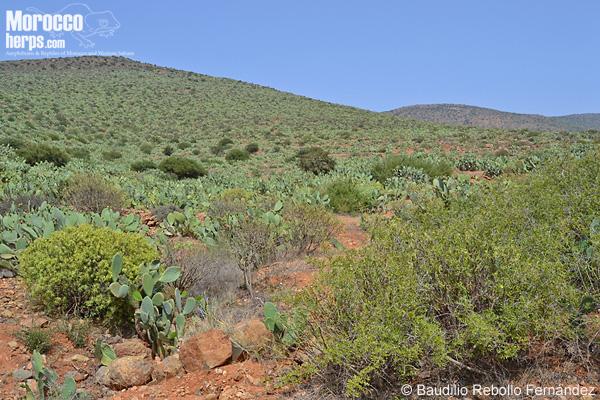 Habitat at Sidi Ifni
