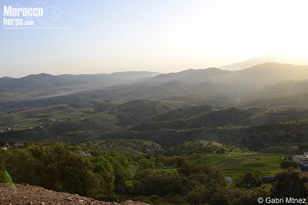Targuist landscape