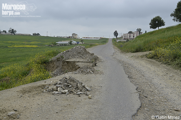 Road between Karia Ba Mohammed and Ketama