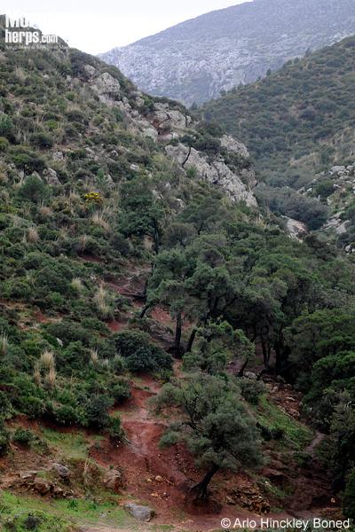 Oued Martil