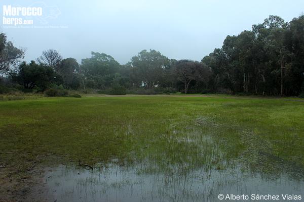 Habitat en Tánger