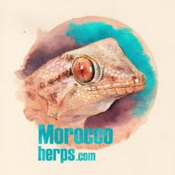 moroccoherps.com 2.0