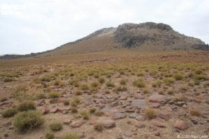 Habitat of Acanthodactylus montanus