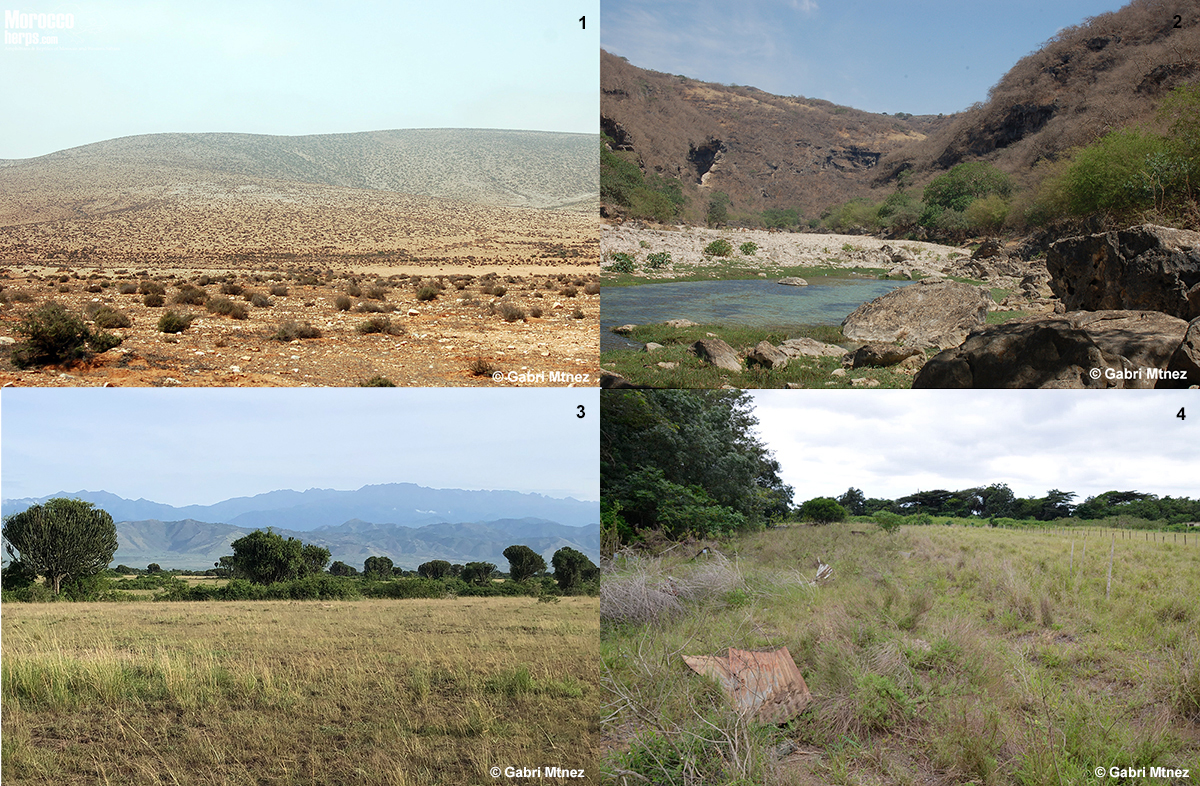 habitat-bitis-arietans-morocco-oman-uganda-south africa