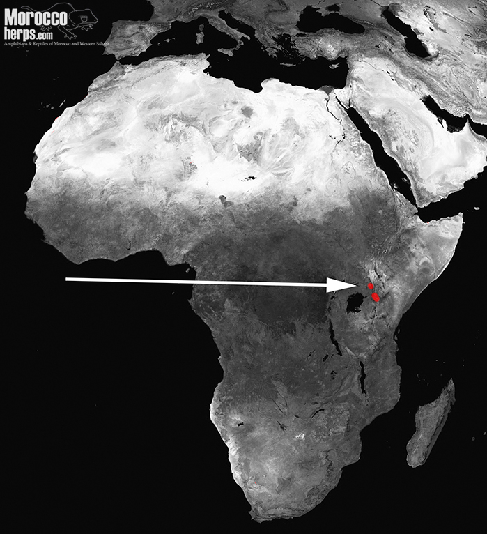 distribution-map-keniabitis-kenyabitis-worthingtoni-bitis