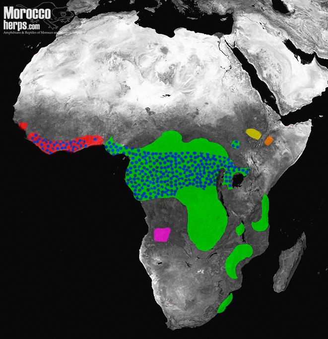 Distribution-map-subgenus-Macrocerastes-Bitis-rhinoceros-gabonica-nasicornis-parviocula-harenna-heraldica
