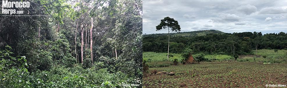 habitat-macrocerastes