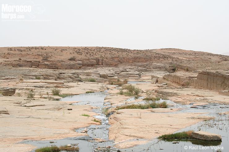 Hábitat: zona árida con fuente de agua (un río). Guelmin. Foto: Raúl León Vigara
