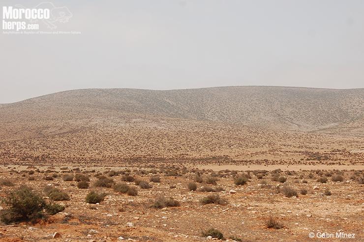 Hábitat: estepa árida con vegetación. Labyar. Foto: Gabriel Martínez del Mármol